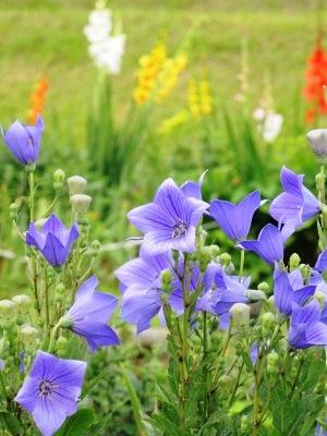 公園の季節の花ほか 更新です。