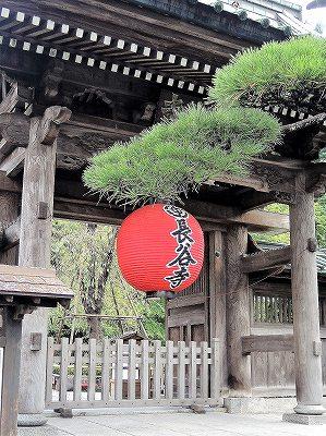 鎌倉 長谷寺  更新です