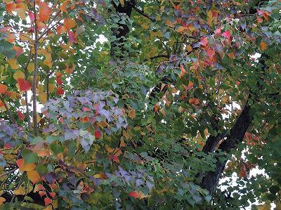 美術の森緑地、風の広場  更新です