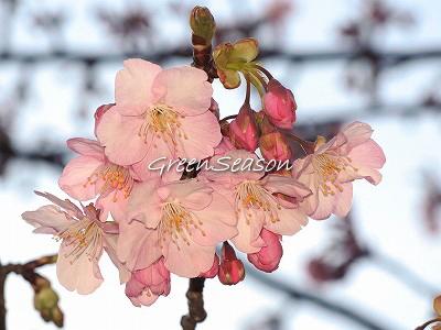 ささやかな春の到来