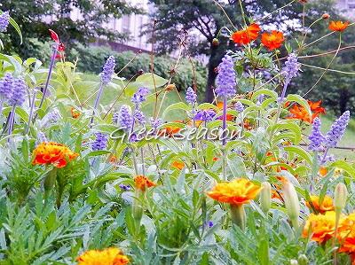 向こう岸の花壇